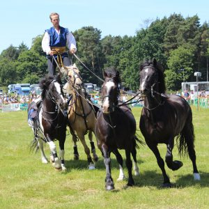 Atkinson Action Horses at last years show